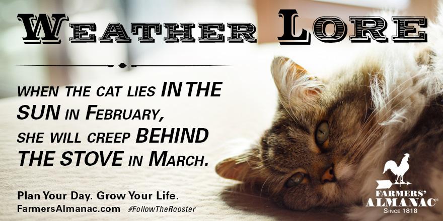 catsun_weatherlore_tw