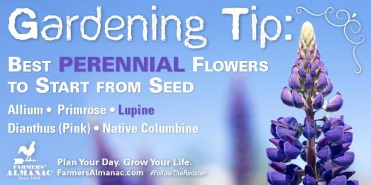 gardeningtip_flowerperennials_tw