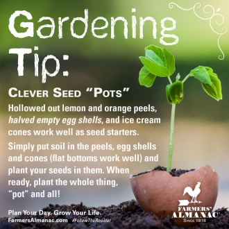 gardeningtip_seedpods_fb