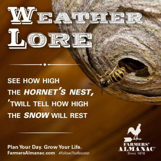 hornetsnest_weatherlore_fb