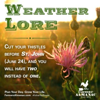 june24_thistles_weatherlore_fb