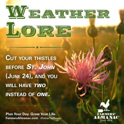 june24_thistles_weatherlore_fb