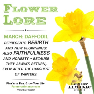 march-flower_fb