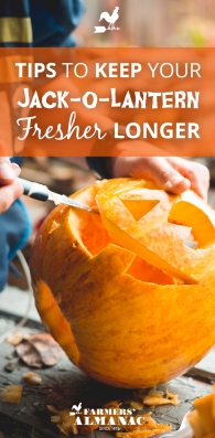 JackoLantern_Fresh_Tips_Pin