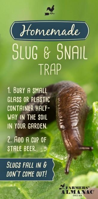 SlugTrap_Pin