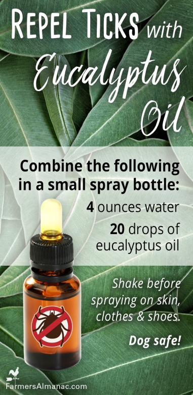 Ticks_EucalyptusOil_Pin