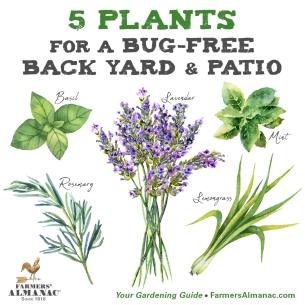 BugFree-Plants-FB