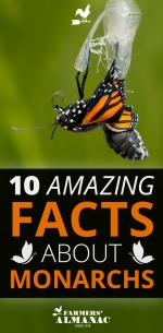 Monarch-Facts-Pin