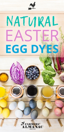 Natural-Easter-Egg-Dye-Pin