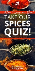 Spices-Quiz-Pin